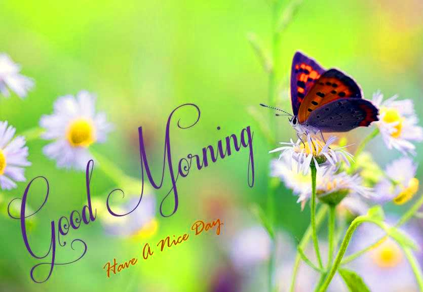 Whatsapp Good Morning HD Photos - YouTube
