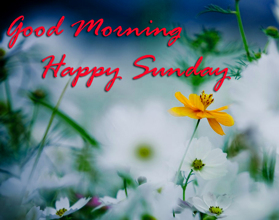 Sunday Good Morning Images Wallpaper Pic Download