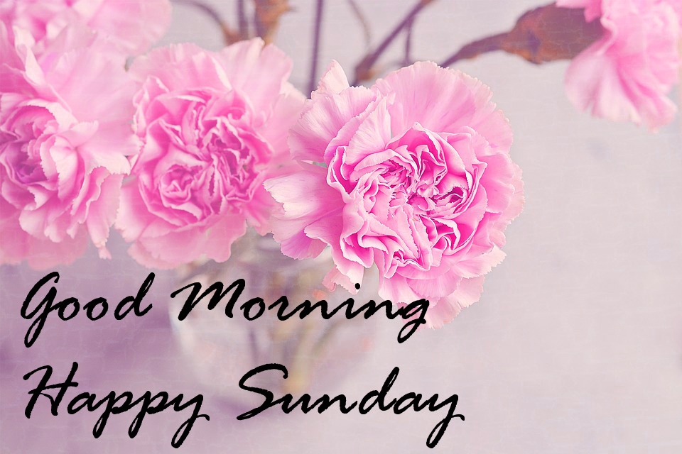 Sunday Good Morning Wallpaper Pics With Flower