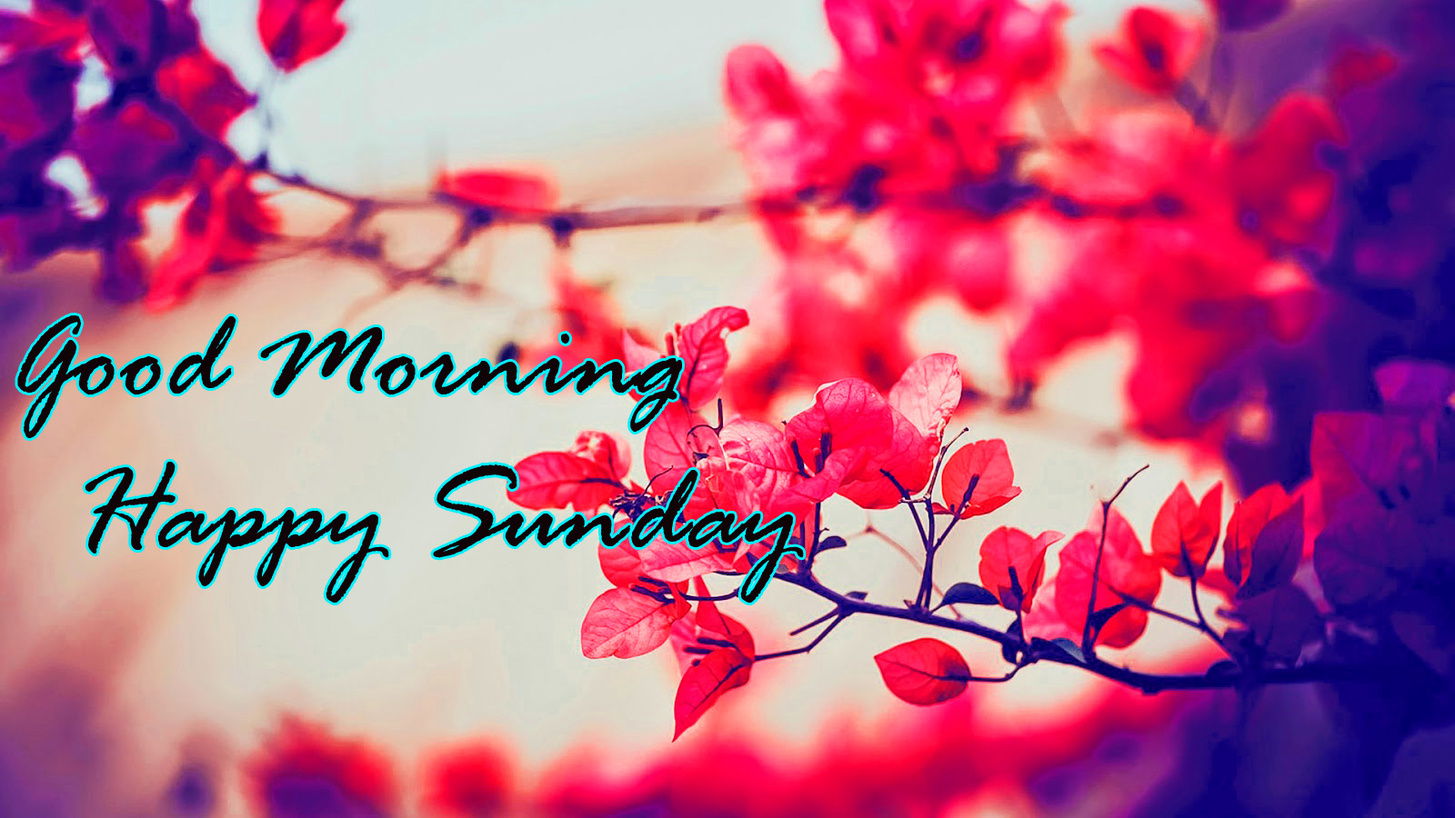 Sunday Good Morning Wallpaper Pics HD Download