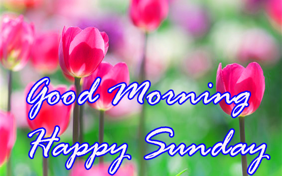Sunday Good Morning photo Pics Wallpaper