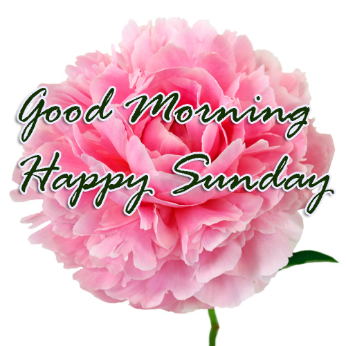 Sunday Good Morning Photo Pics HD Download