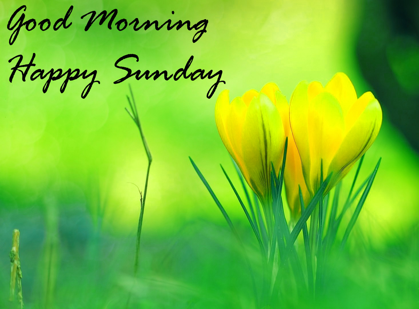 Sunday Good Morning Images Pics Free Download for Facebook