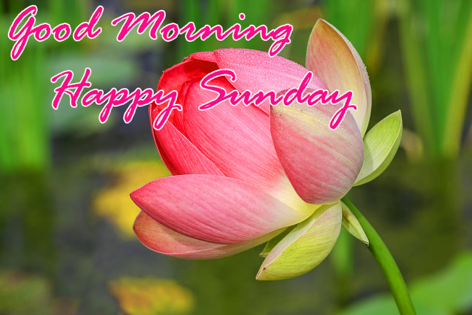 Sunday Good Morning Photo Wallpaper Pics Download