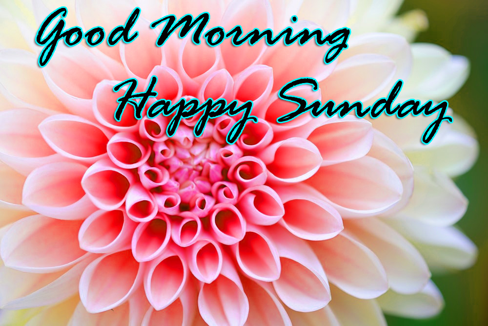 Sunday Good Morning Images Photo Pic Free Download