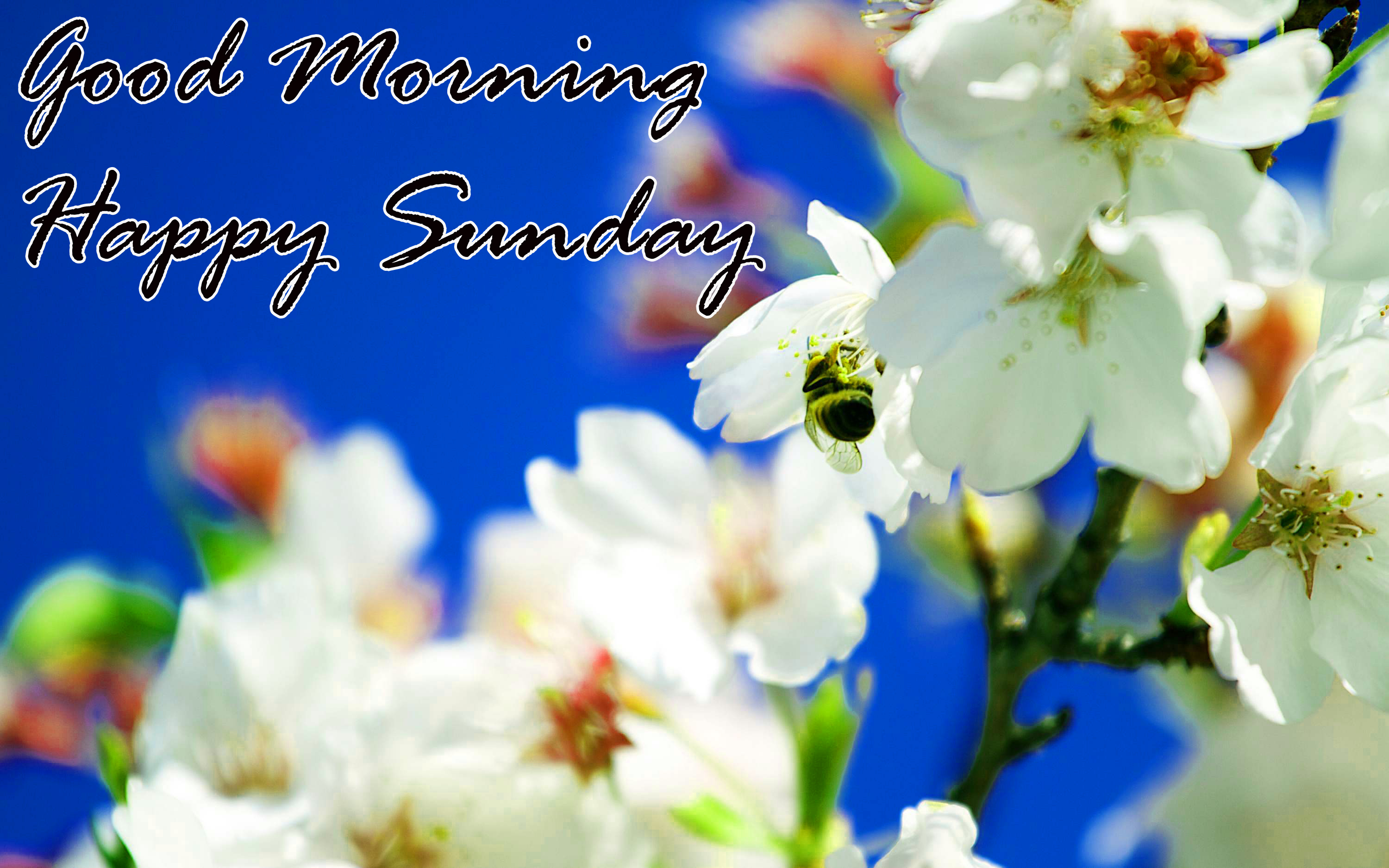 Sunday Good Morning Images Wallpaper Pictures Download In HD