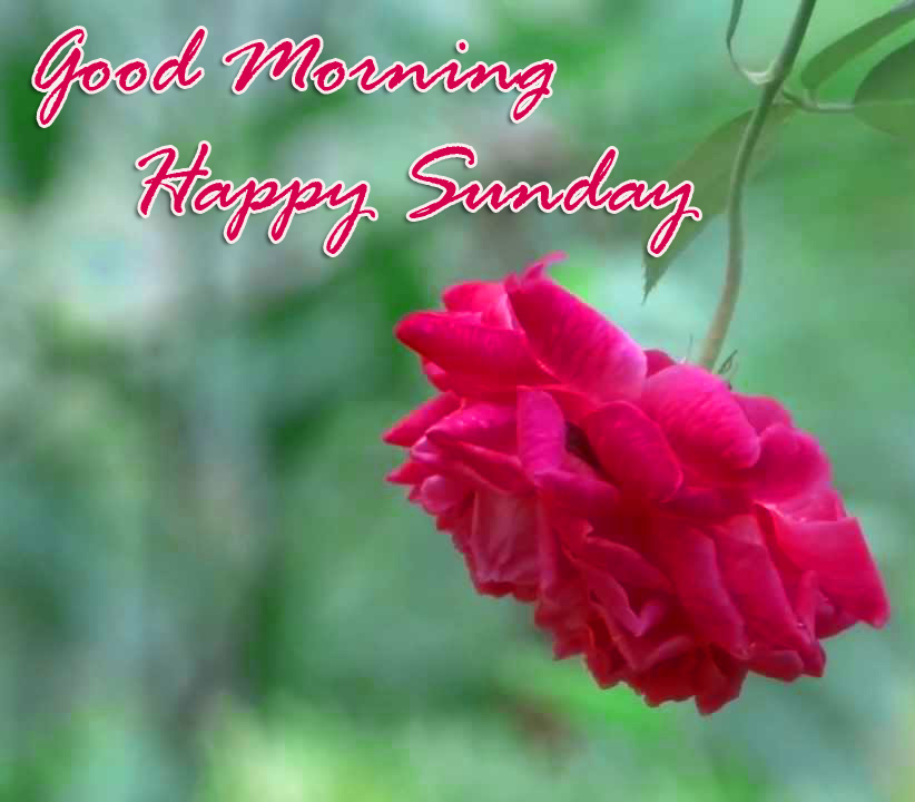 Sunday Good Morning Wallpaper Photo pics