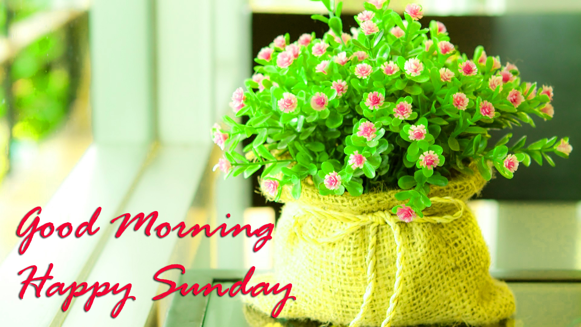 Beautiful HD Sunday Good Morning Images Pics Download for Facebook
