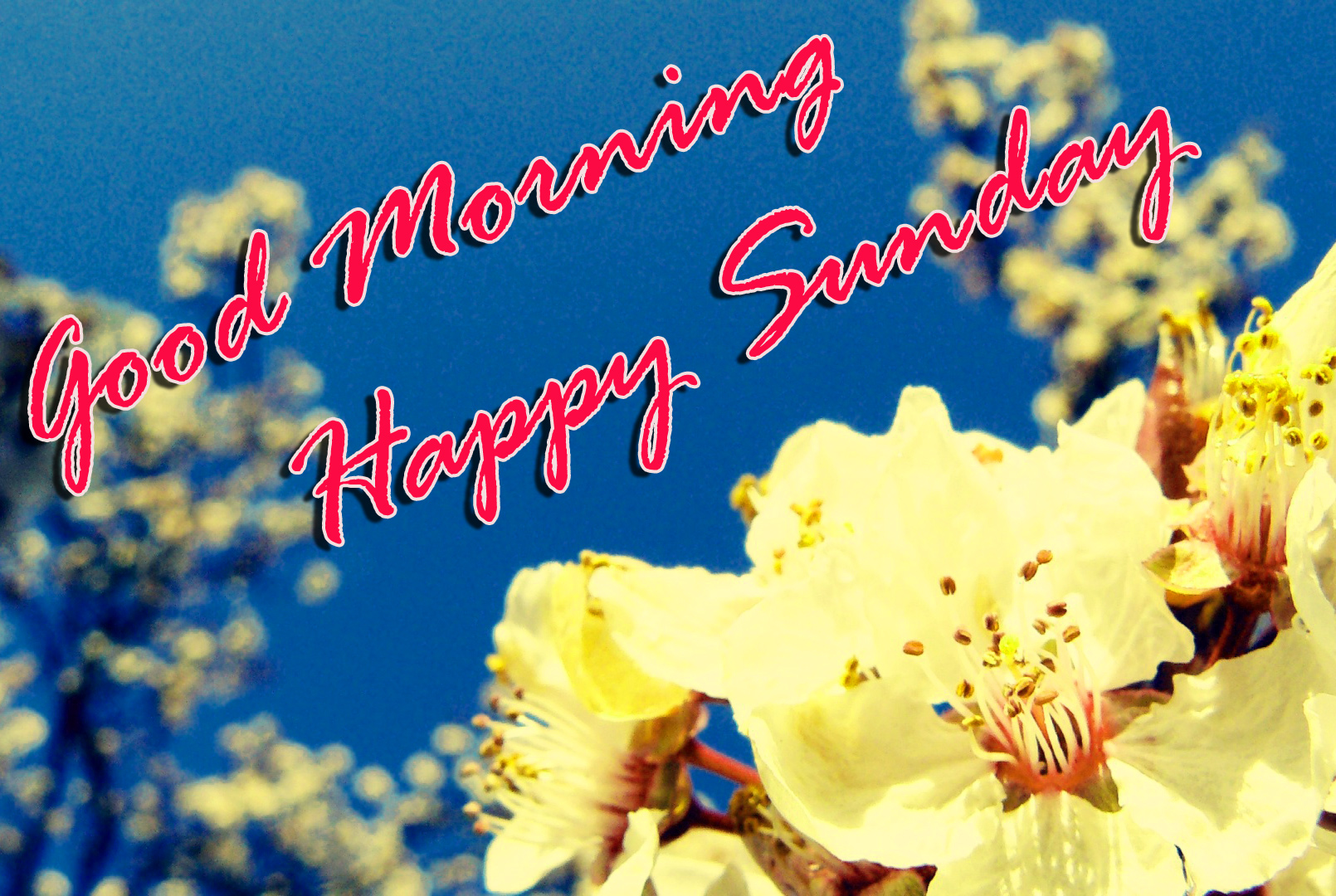 Sunday Good Morning Images Photo Pics Free Download
