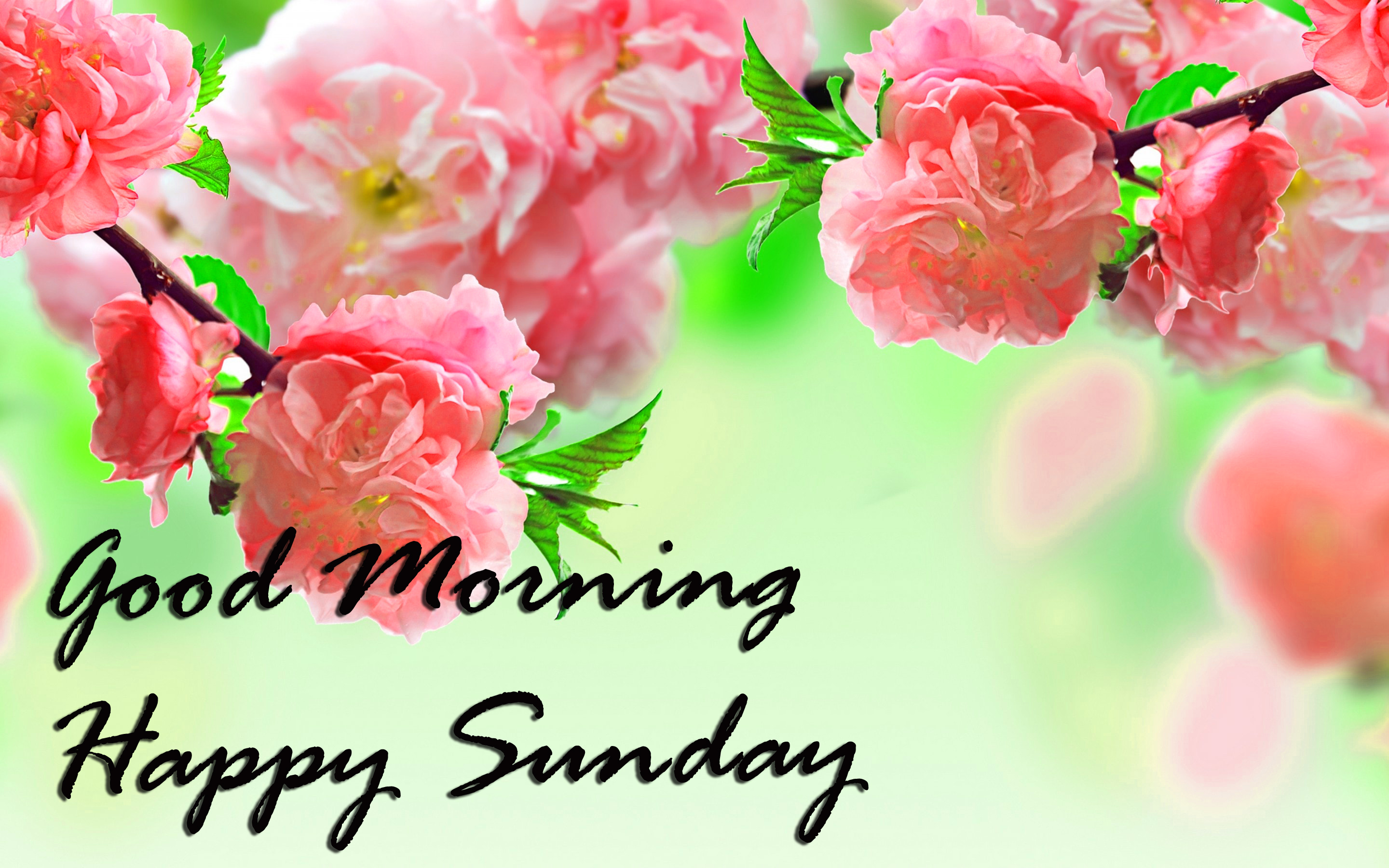 Sunday Good Morning Photo pics Download for Facebook