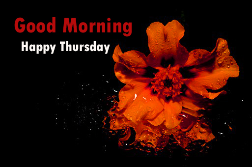 Good Morning Thursday Images Wallpaper Photo Pictures Pics HD Free Download