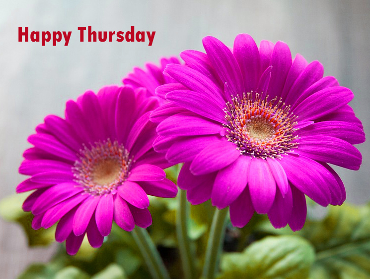 Flower Good Morning Thursday Images Wallpaper Photo Pictures Free Download