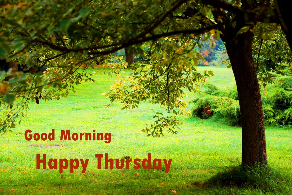 Good Morning Thursday Images Wallpaper Photo Pics HD Free Download