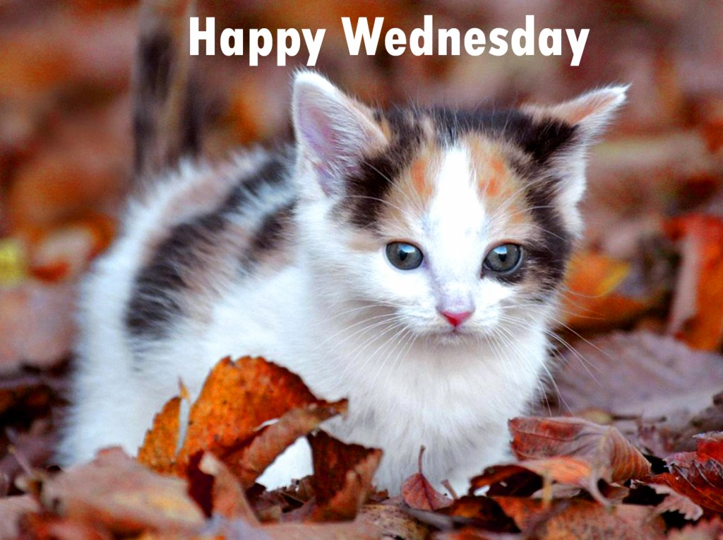 cute-cat-wallpapers-wednesd