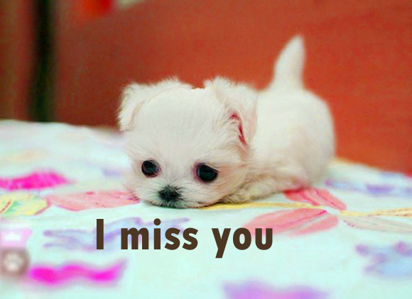 I miss u You Pictures Images Wallpaper Photo Pictures HD Free Download