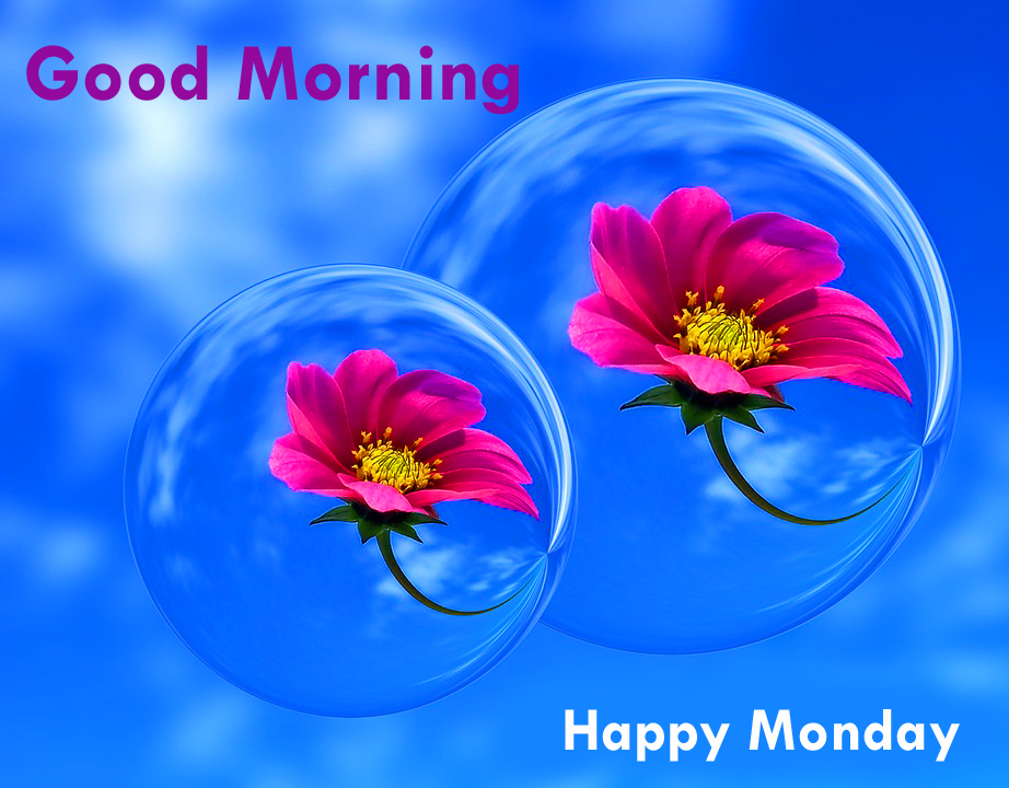 213+ Good Morning Happy Monday Wishes Quotes Images Download