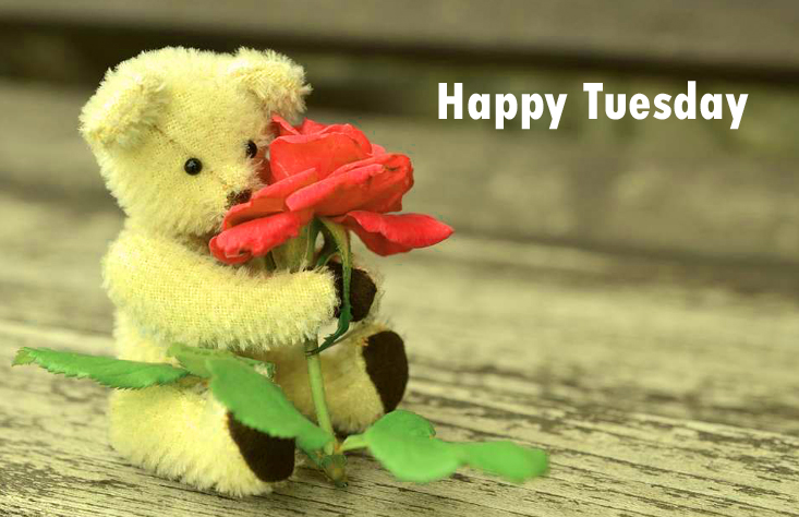 tuesdaycuteimages