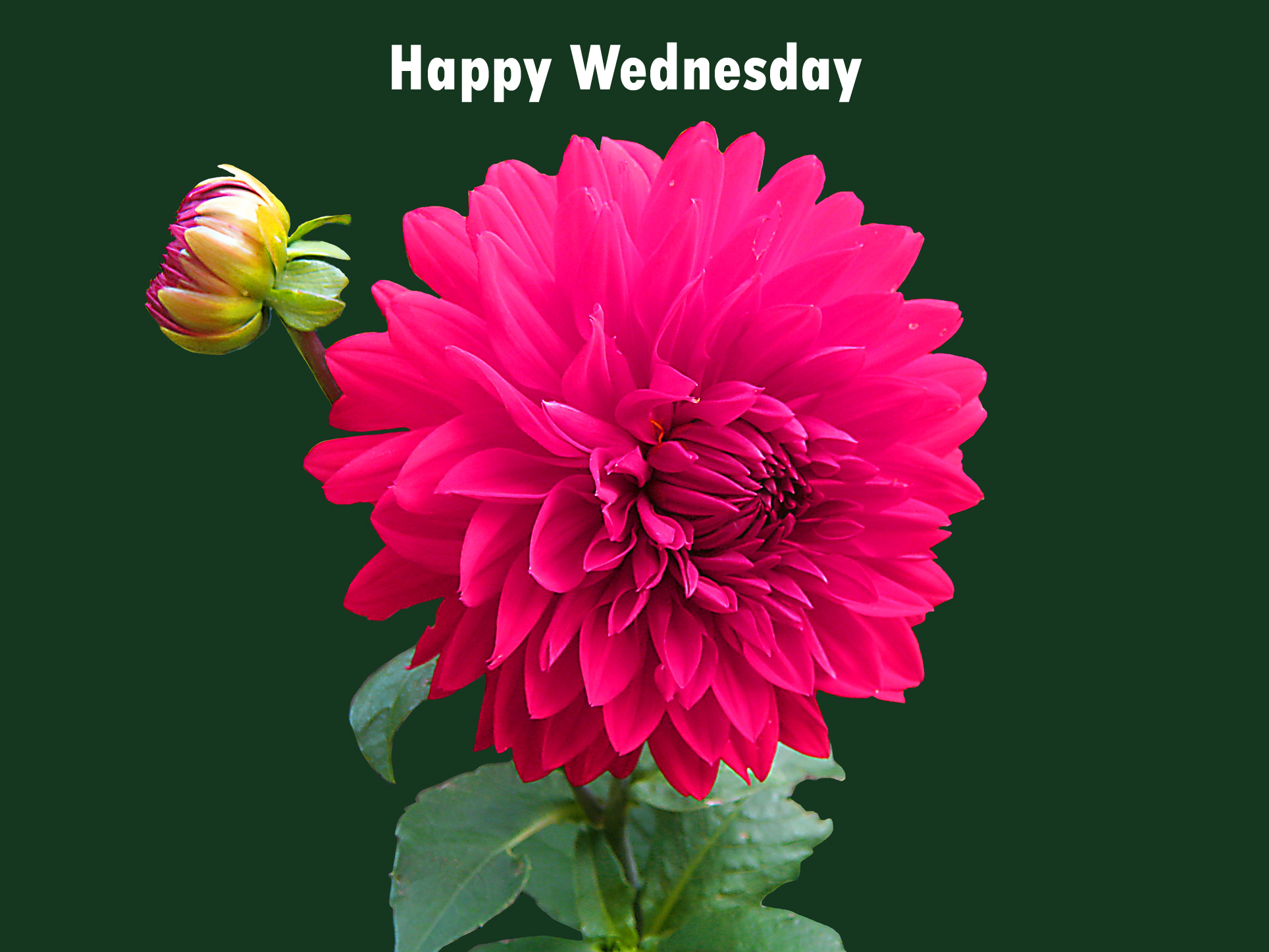 Happy Wednesday – Flowers To Wish You The Best | Wednesday ... |Wednesday Flowers