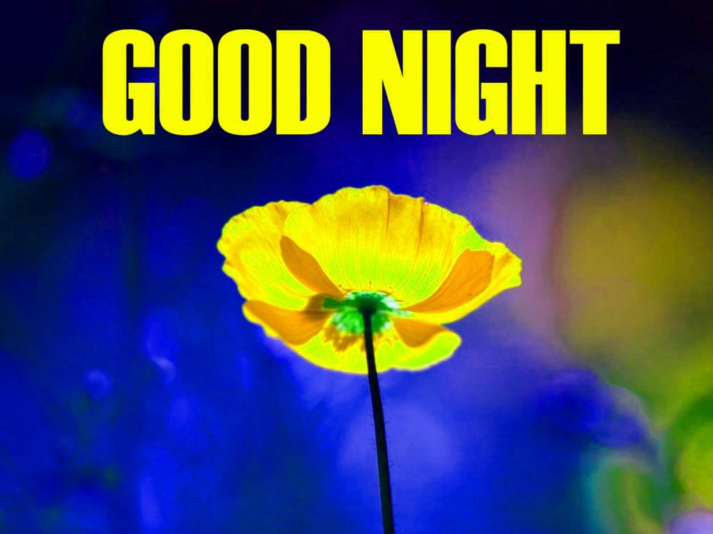 Good-Night-Flower-pictures