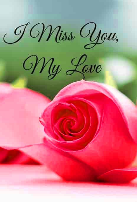 I Miss You With Red Rose