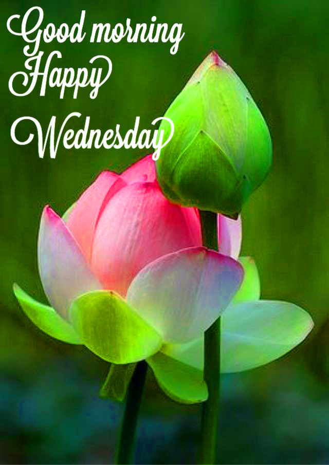 Good Morning Wednesday Images Wallpaper Download