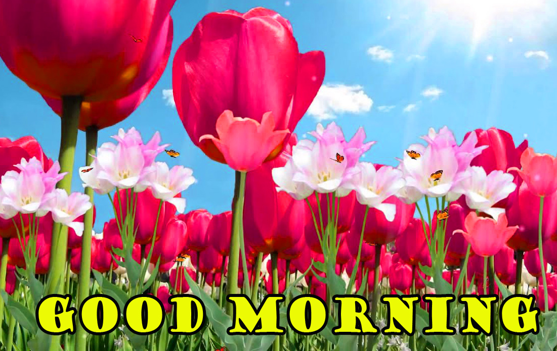 Good Morning Flowers Images Wallpaper photo Pictures Pics Download