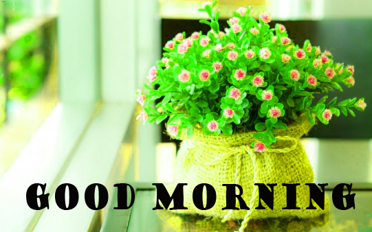 Good Morning Flowers Images Photo Wallpaper Free HD Download