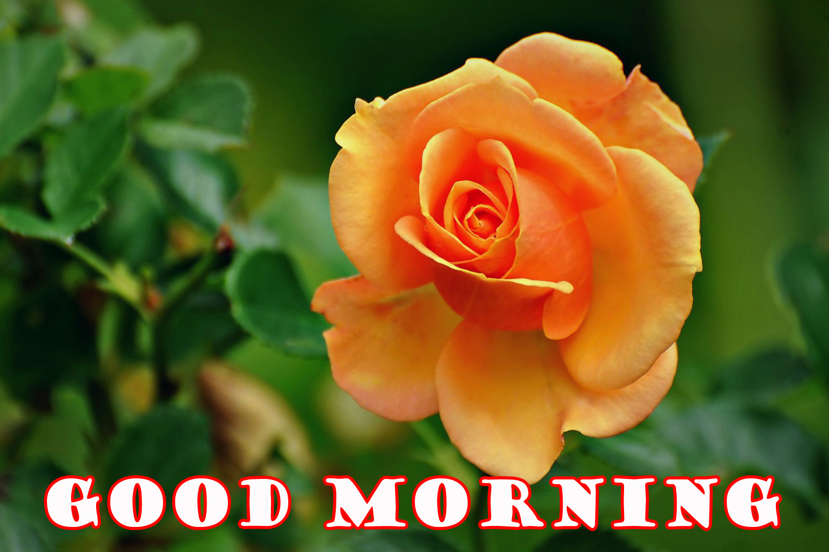 Good Morning Flowers Wallpaper Pictures Images Free Download