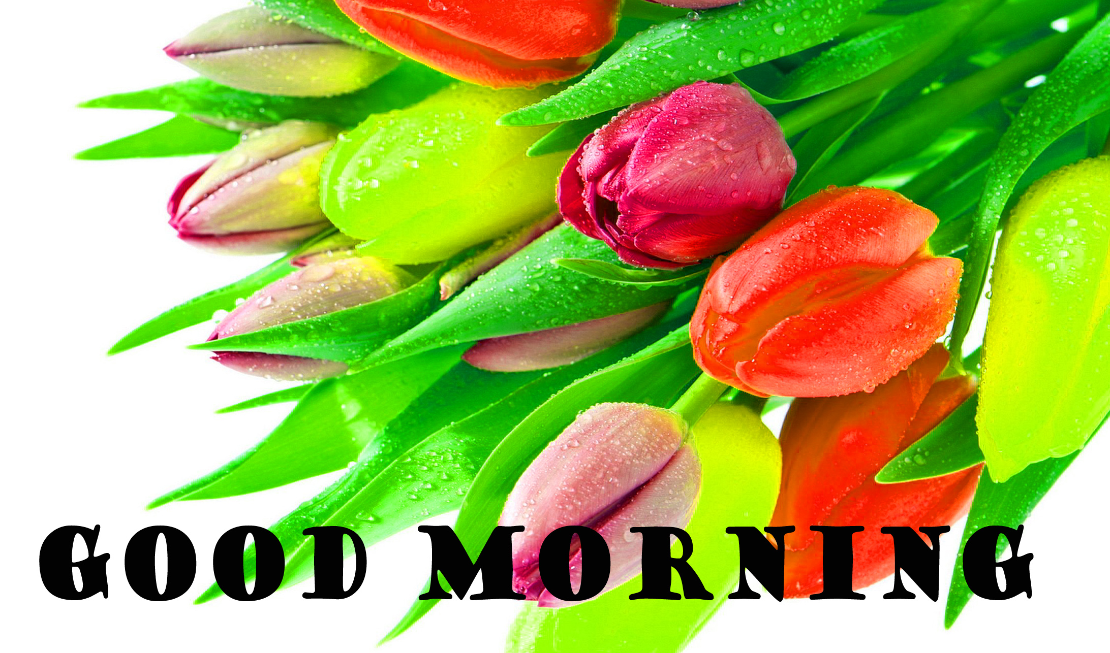 Good Morning Flowers Wallpaper Pictures Images HD For Whatsapp