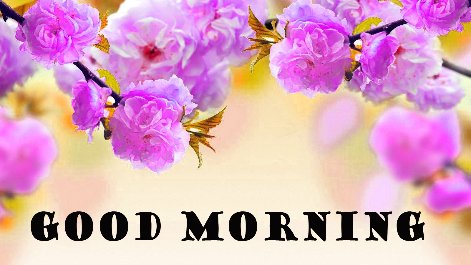 Good Morning Flowers Wallpaper Pictures Images For Facebook