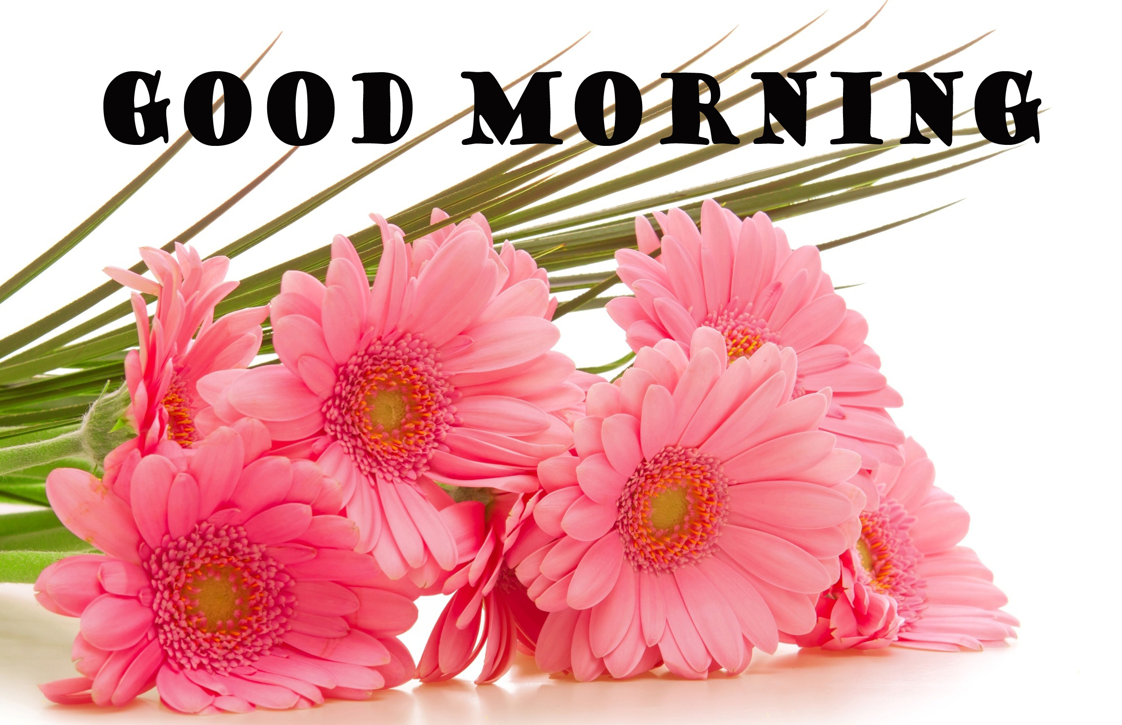 Good Morning Flowers Wallpaper Pictures Images For Mobile