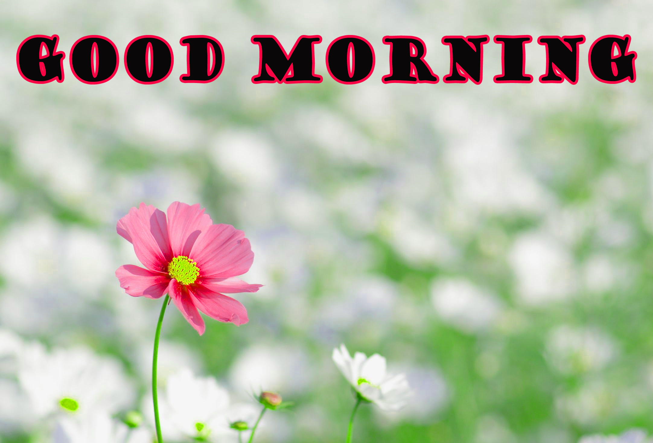 Good Morning Flowers Wallpaper Pictures Images HD Download