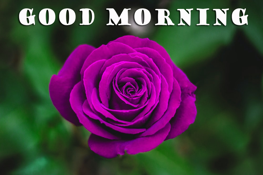 Good Morning Flowers Wallpaper Pictures Images Free HD Download