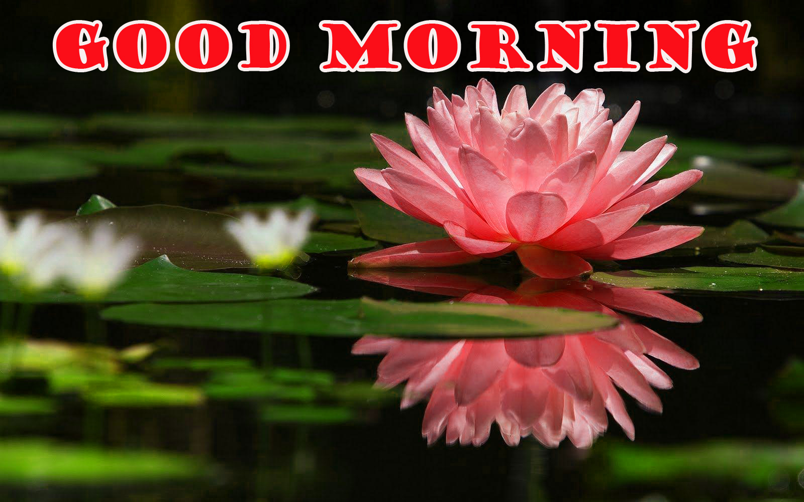 Good Morning Flowers Pictures Images Photo Wallpaper Download