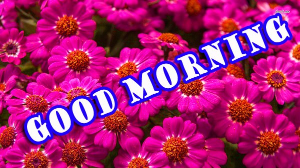 Good Morning Flowers Photo Wallpaper Pictures Free Download