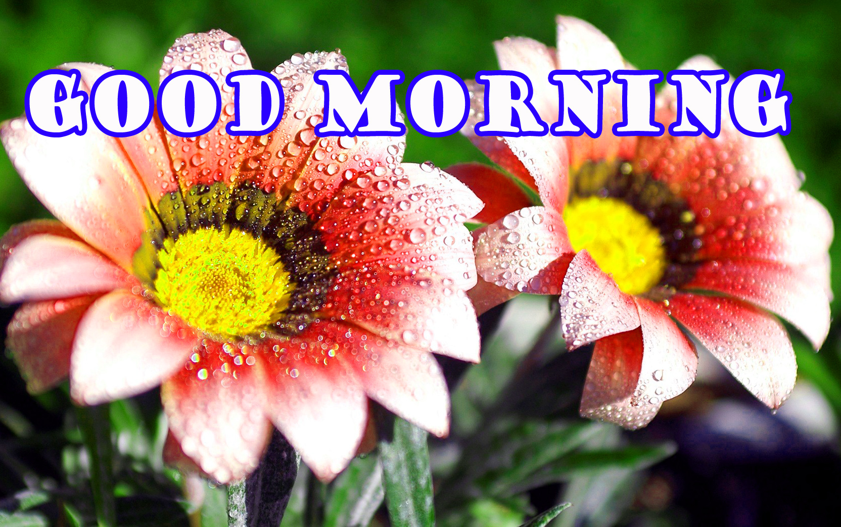 Good Morning Flowers Wallpaper Images Photo HD