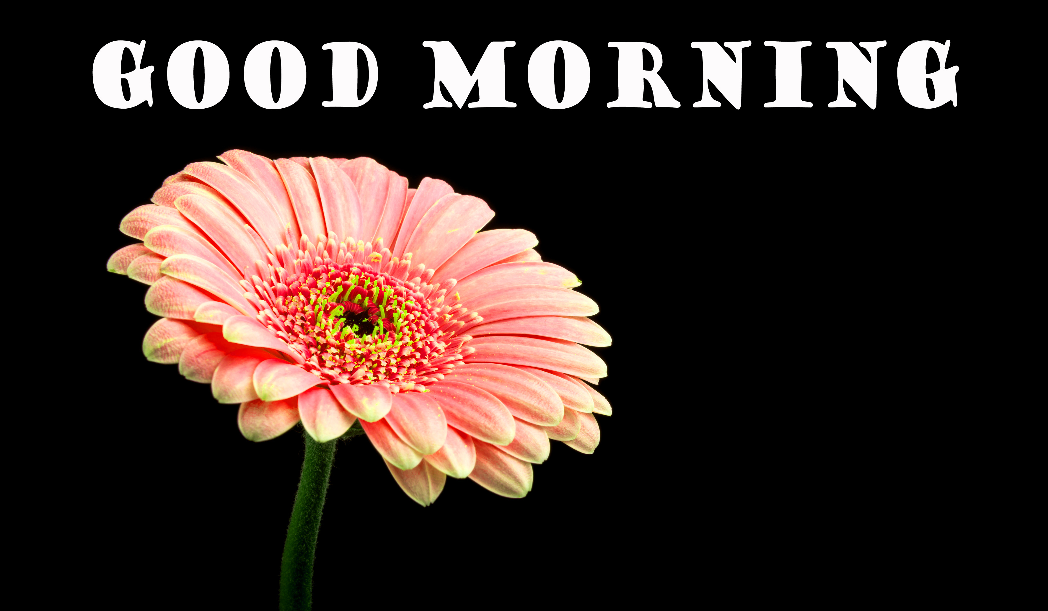 Good Morning Flowers Photo Wallpaper Pictures Download