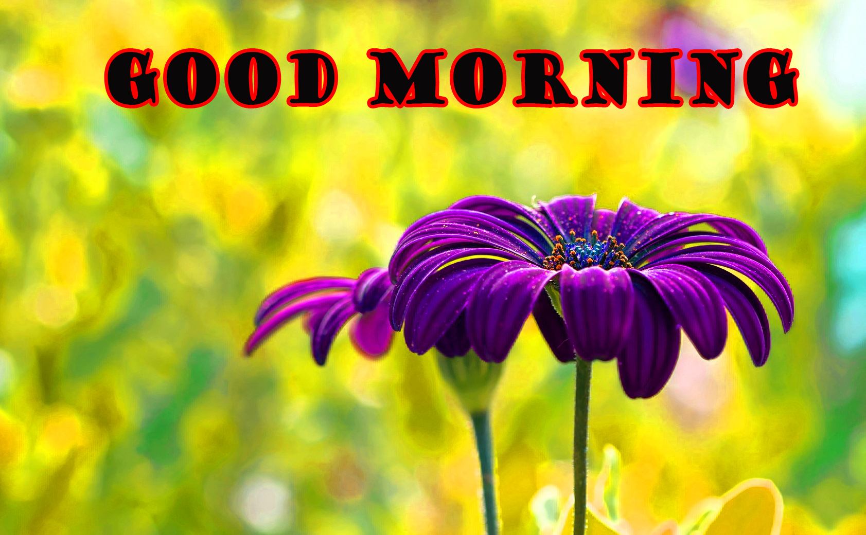 Good Morning Flowers Wallpaper Pictures Free Download