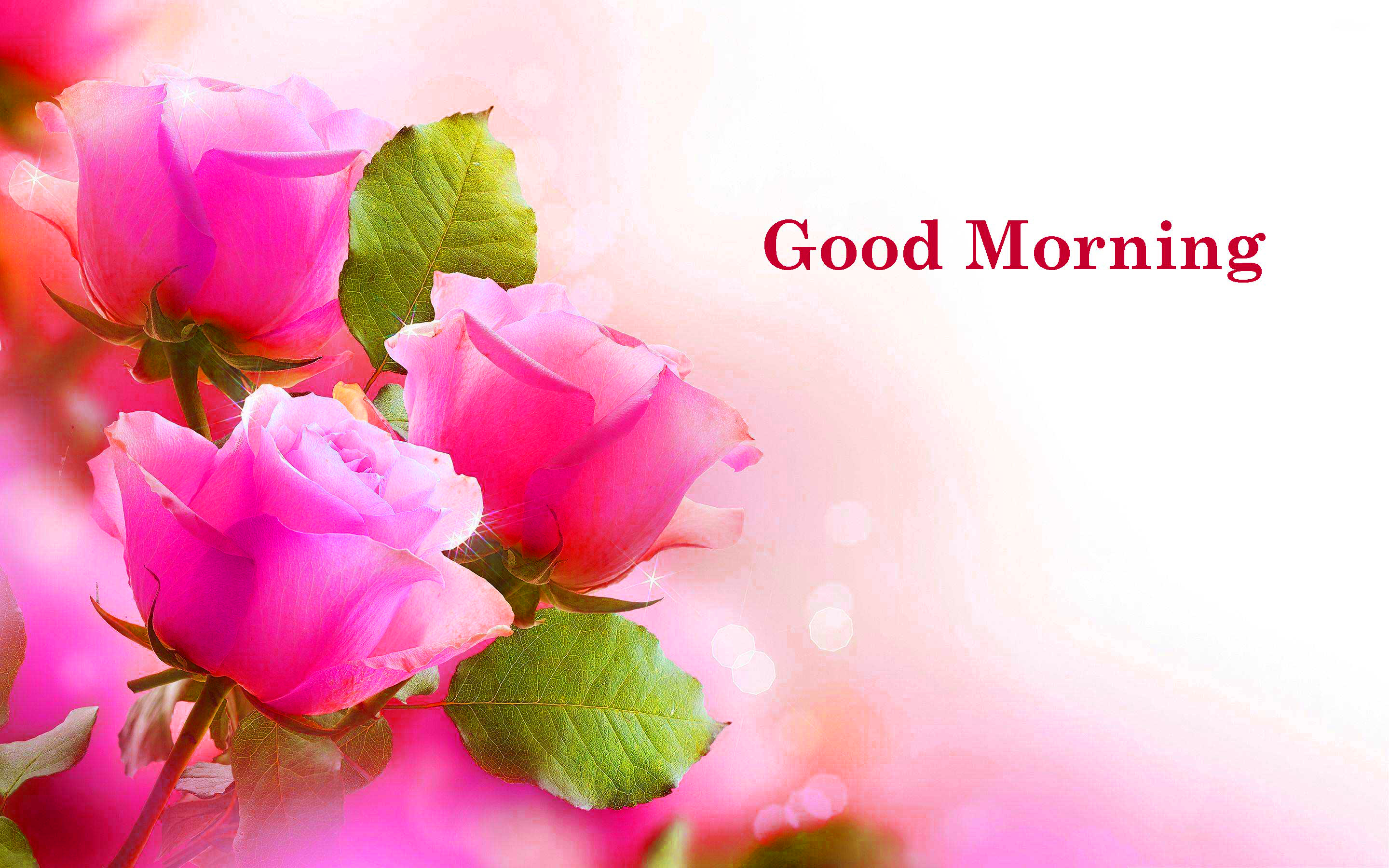 Flower  Good Morning Photo HD Download