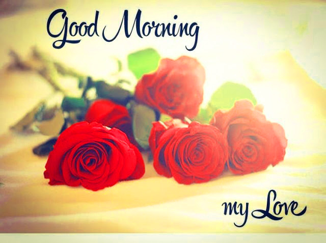 Flower  Good Morning  Images With Red Rose