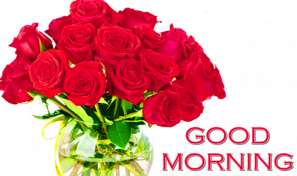 Flower  Good Morning Images Pics With Red Rose