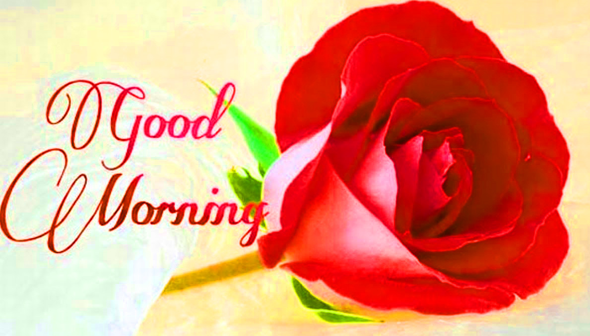 Flower  Good Morning with Red Rose