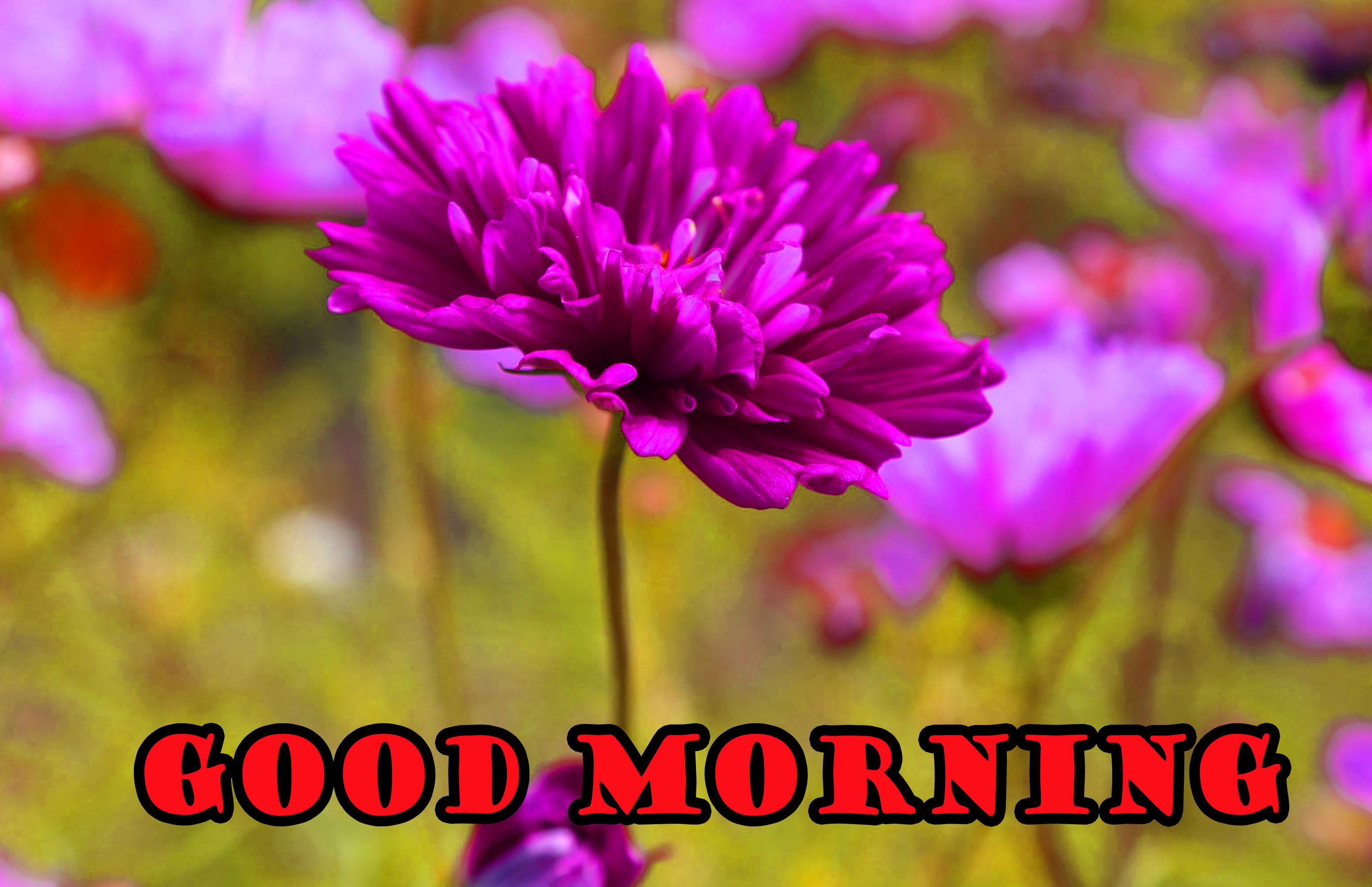 Good Morning Flowers Wallpaper Pictures Images HD