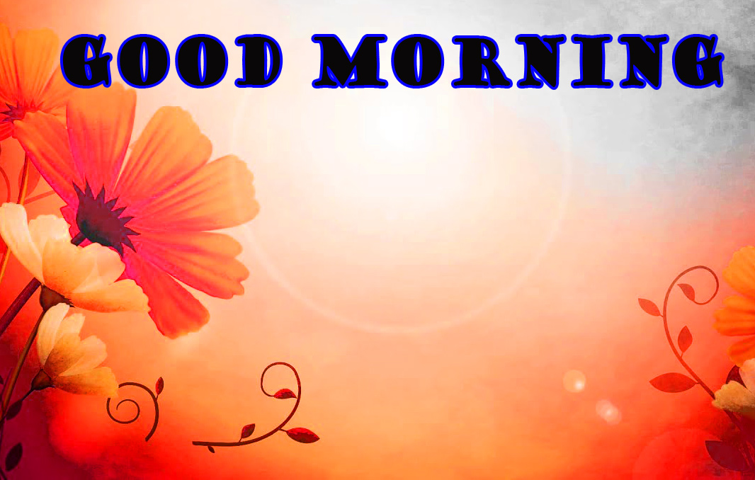 Good Morning Flowers Images Pictures Photo HD