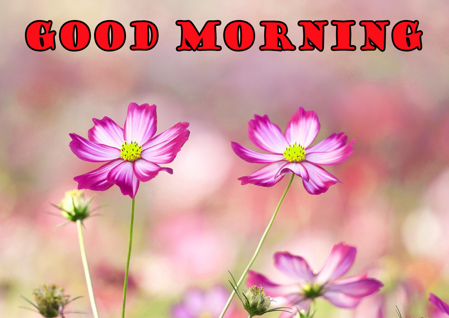Good Morning Flowers Images Photo Wallpaper HD