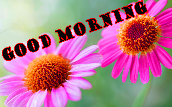 Good Morning Flowers Photo Wallpaper Pictures HD
