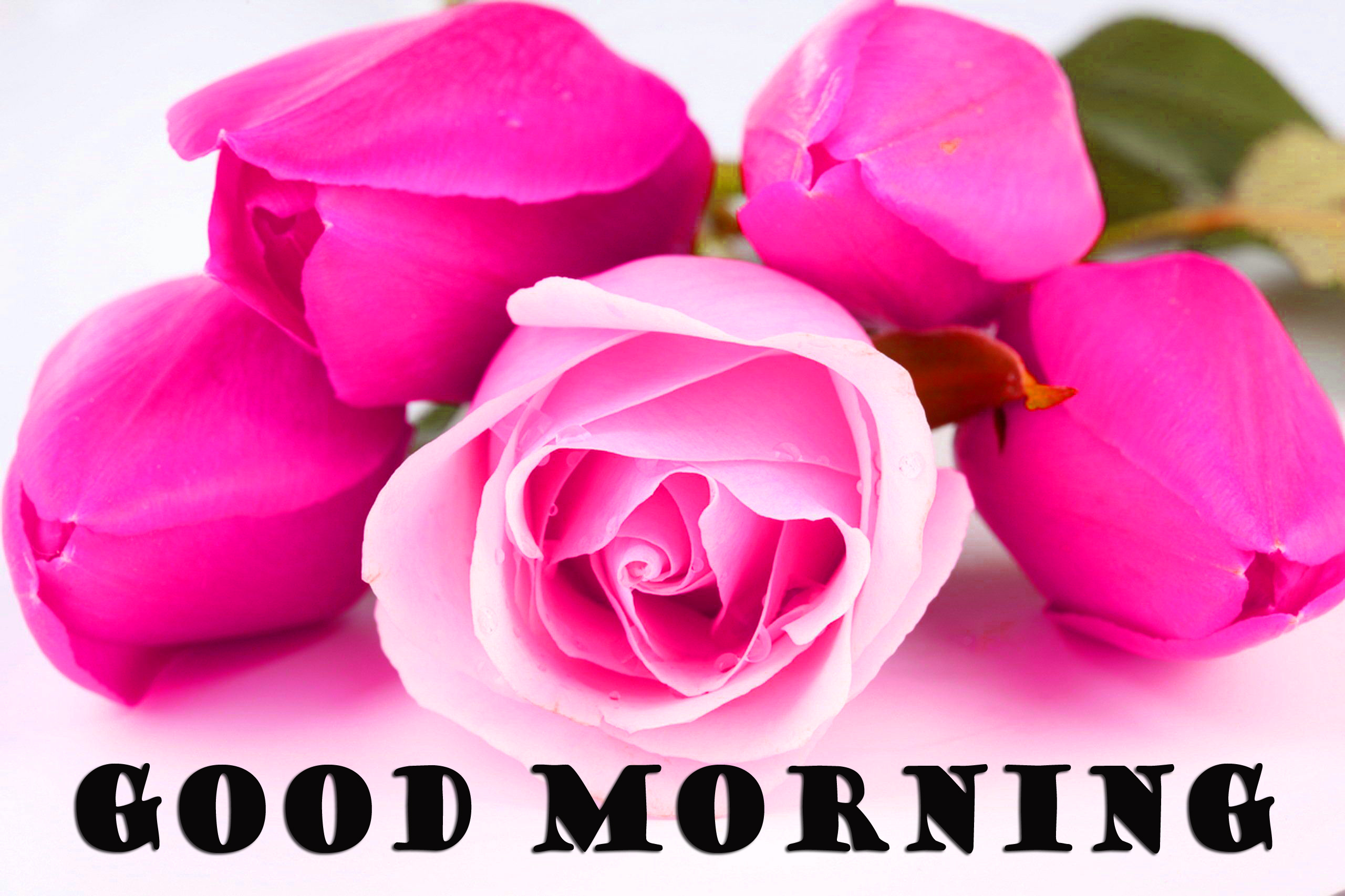 Good Morning Flowers Photo Wallpaper Pictures For Whatsapp