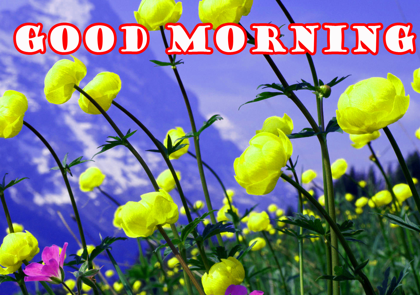 Good Morning Flowers Pictures Images Photo HD Download