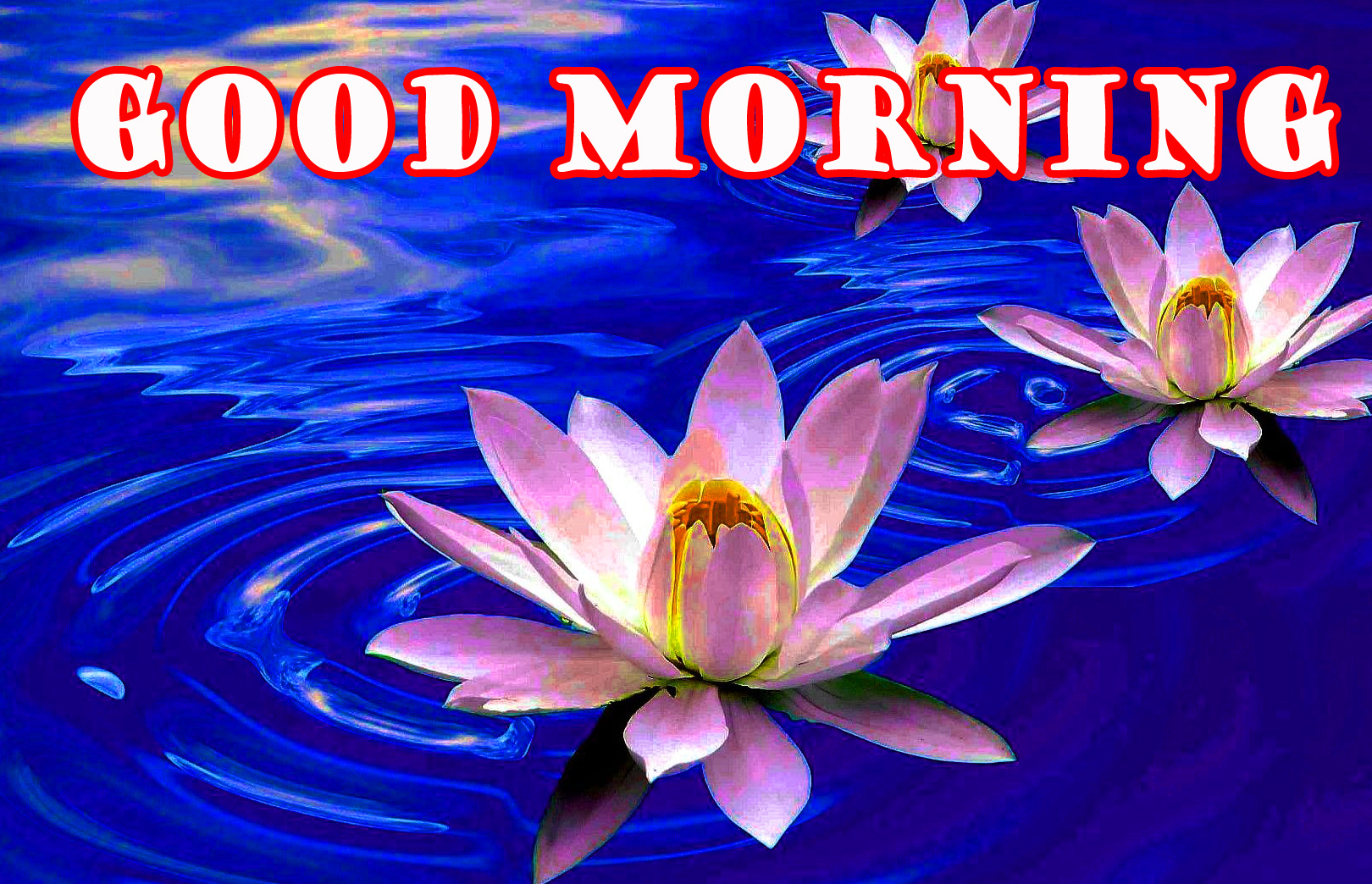 Good Morning Flowers Pictures Images Photo Download