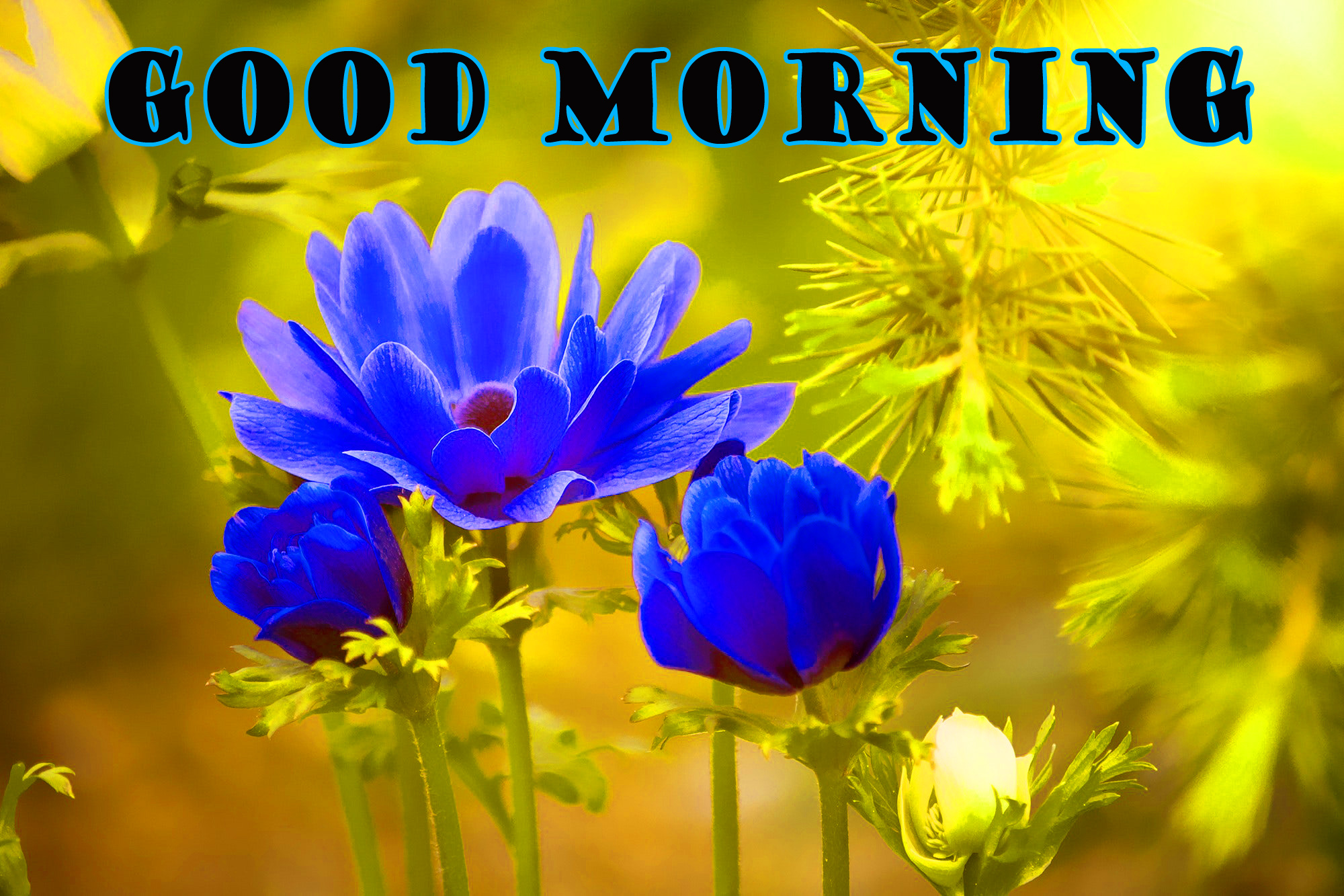 Good morning all friends hd image download 2019